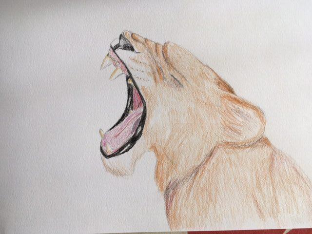 Kajsa løve 1