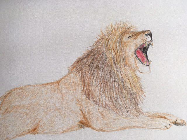 Kajsa løve 2